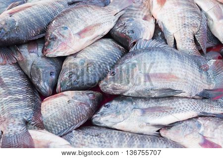 fresh Nile Tilapia fish for sale - food