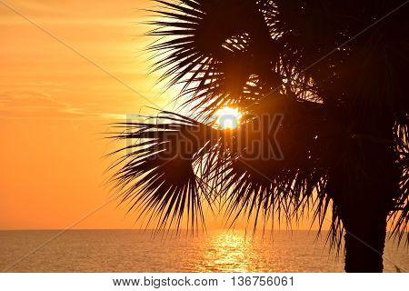 Sun rise through palm frond in Florida