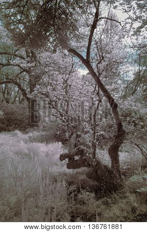 Stunning Infrared Landscape Image Of Forest With Alternative Color