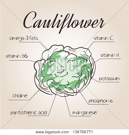 vector illustration of nutrients list for cauliflower.