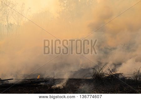 Smoke field after wildfire. temperature background and wallpaper