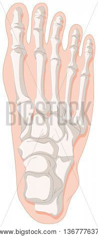 Bone x-ray for gout toe illustration