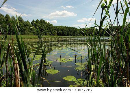 lilies lake