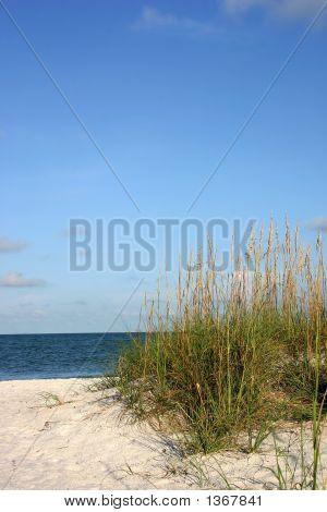Tropical Beach Views