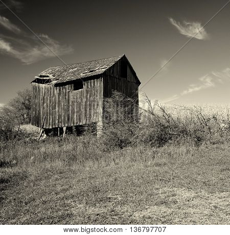 abandoned barn grassy pasture black and white