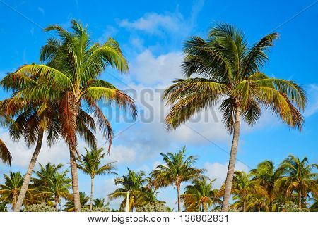 Singer Island beach at Palm Beach Florida Palm trees in USA