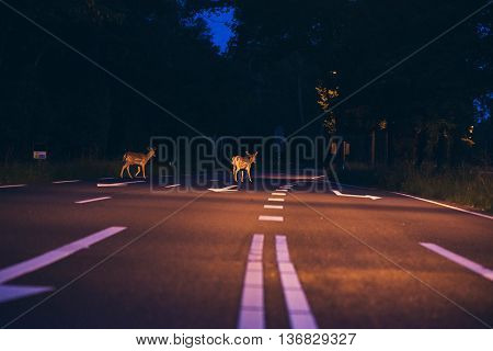 Two Deer Crossing The Road At Dawn