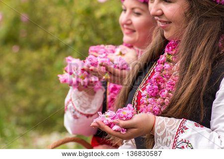 Rose Picking Festival