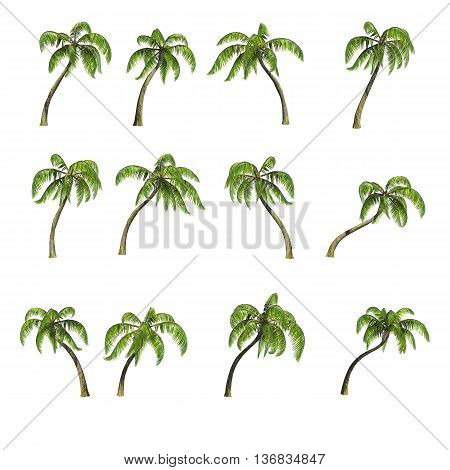 Collection various palm trees isolated on white background, 3D render, clipping path included