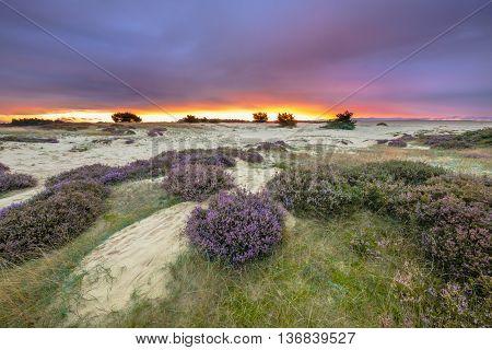 Purple Sunset Hoge Veluwe