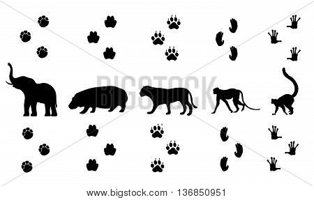 Vector set of walking jungle animal tracks