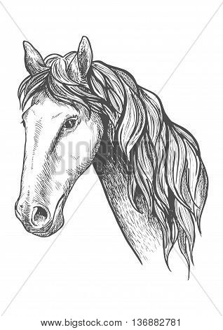 Purebred racehorse graceful profile with sketched head of appaloosa mare with slender neck and long wavy mane. May be use as equestrian sport symbol or horse breeding theme design