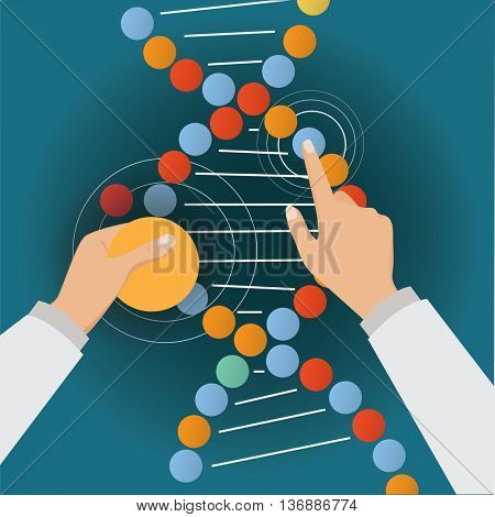 Hands of scientis fix the DNA molecule.