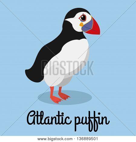 cartoon puffin color illustration. Stock bird vector.