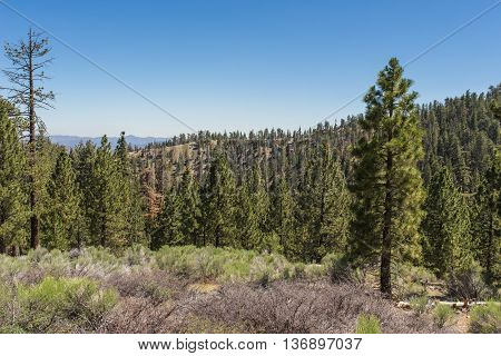 Mountain Meadow In National Forest