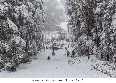 People Tobogganing On Mount Donna Buang Toboggan Run