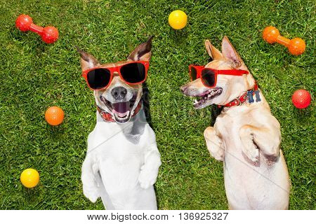 Two Funny Playing Dogs