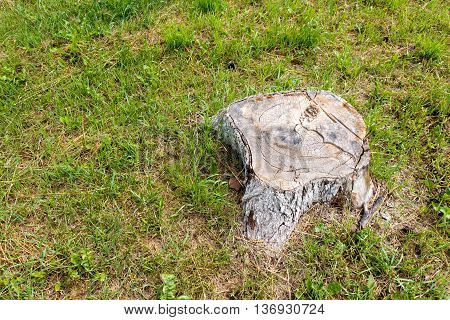 The stump of a large and old tree on the background of green grass.