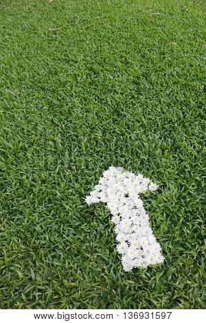 arrow made from daisy flowers on green grass background, spring time.