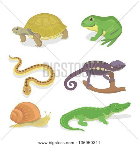 Reptiles and amphibians decorative set of crocodile turtle snake chameleon icons in cartoon style isolated vector illustration
