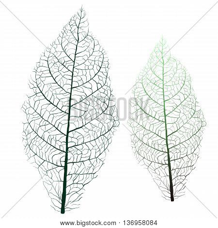 tobacco leaf with green veins, vector illustration