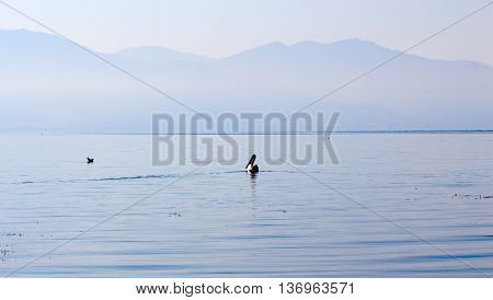 Picture of a Birds on a pier on the lake Prespa Macedonia poster