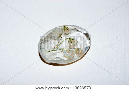 Gypsophila In Epoxy Resin