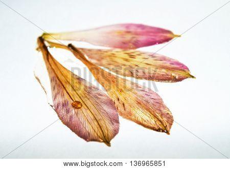 Petals Inside Epoxy Resin_2