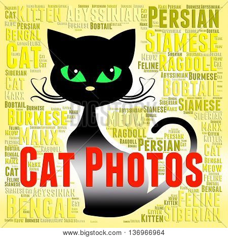 Cat Photos Means Feline Picture And Snapshots