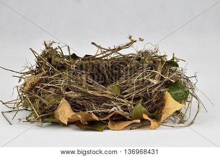 Bird nest on a white background. Birds nest.