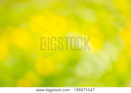 Blurry green grass and yellow summer flowers