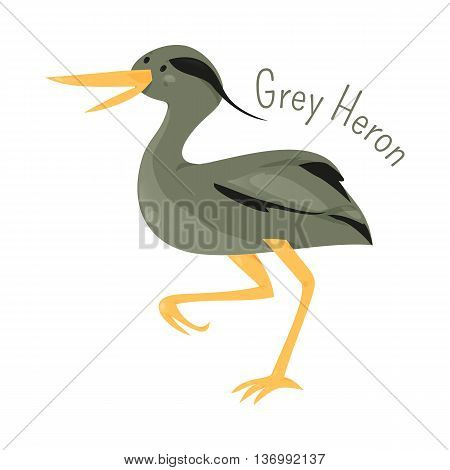 Grey heron isolated on white. Ardea cinerea. Long-legged predatory wading bird of the heron family, Ardeidae. Child fun pattern icon. Part of series of various bird species. Wildlife concept. Vector