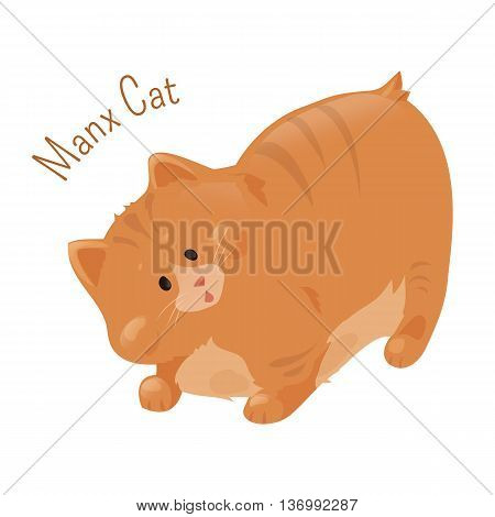 Manx cat isolated on white. Manks. Domestic felis catus with naturally occurring mutation that shortens tail. Furry mammal. Part of series of cartoon kitten species. Child fun pattern icon. Vector