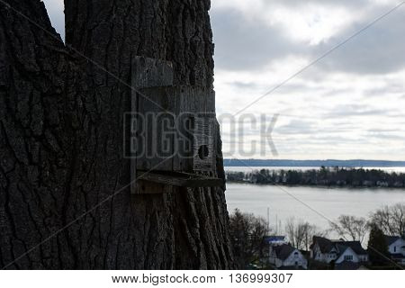 A bird house affixed to a tree on the bluff above Harbor Springs, Michigan.