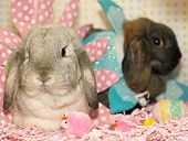 two cute easter bunnies one brown one white all dressed up for easter surrounded by colorful easter eggs and easter chicks poster