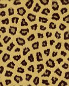leopard medium spots short fur textured background poster