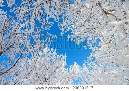 Branches Of A Tree Covered With Fluffy Hoarfrost Against The Blue Sky.  Frost Is The Coating Or Depo