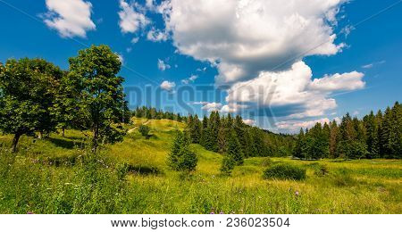 Grassy Meadow Among The Forested Hills. Beautiful Summer Landscape Under The Blue Sky With Row Of Cl