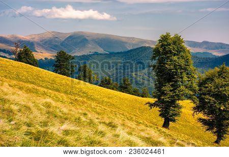 Tree On The Grassy Hillside. Svydovets Mountain Ridge In The Distance. Beautiful Summer Nature Scene