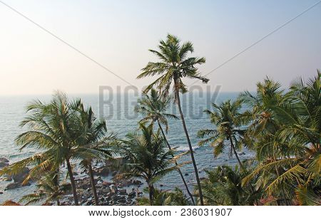 Beautiful Tropical Palm Trees Against The Blue Sea And Sun. Palm Trees On A Sunset Background. Tropi