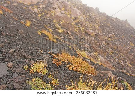 Yellow Moss On Mount Etna. The Etna Volcano Crater. Black Volcanic Earth, Volcanic Lava And Stones.