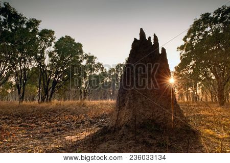Termite Mound At Dawn (nasutitermes Triodae), Northern Territories, Australia