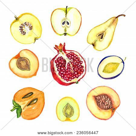 Sliced Fruits Collection, Apple, Pear, Plum, Apricot, Sweet Plum, Peach, Pomegranate, Persimmon, Qui