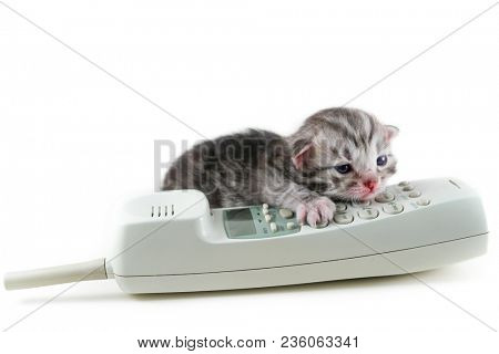 The newborn kitten calls help line