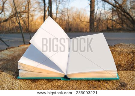 An Open Book In Blue Bound Lying On A Stump Background Of The Nature Forest Trees Road. Turn Pages.