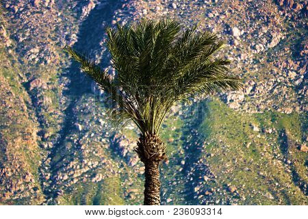 Palm Tree With Rural And Rugged Mountains Beyond Taken In Palm Springs, Ca