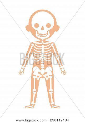 Boy Body Anatomy With Skeleton System. Health Medical Icon, Internal Organs, Human Body Physiology I