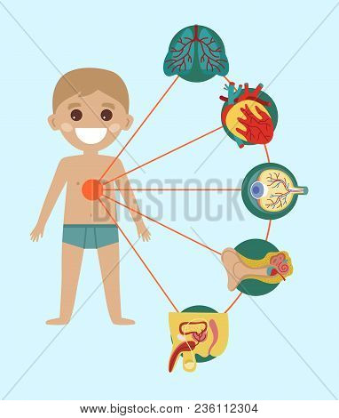 Kid Health Medical Poster With Human Body Anatomy. Kidney, Lung, Liver, Heart, Stomach, Intestine Me
