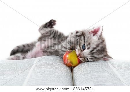 Cute kitten lays down on a book and play with her ball.