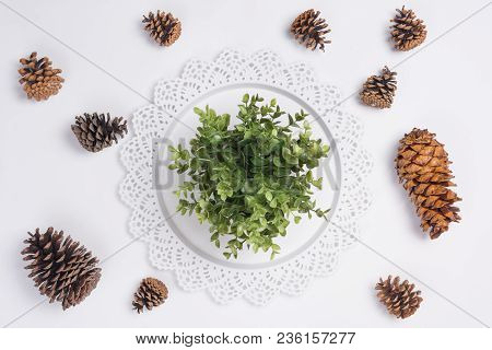Tray With Plant And Pine Cones Flat Lay Top View